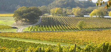 St. Helena Winery Tours