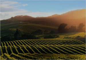 Sonoma Photography and Videography